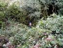 vegetation_hb